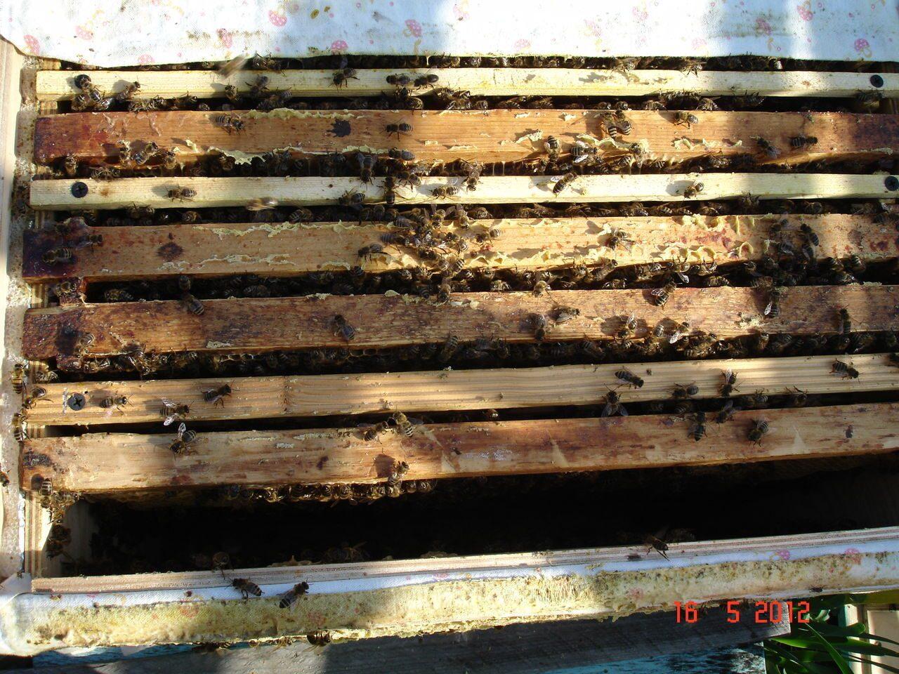 схема пчело ульев 16 рамочные